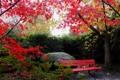 Картинка листья, осень, деревья, природа, небо, лавочка. камень