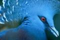Картинка глаз, птица, цвет, перья, клюв