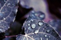 Картинка листья, капли, роса, природа, вода, цвет