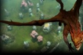 Картинка Dragon, steam, Dota 2, Фон профиля