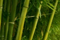 Картинка зелень, ветви, бамбук