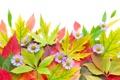 Картинка осень, листья, цветы