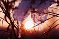 Картинка лед, зима, трава, солнце, закат, искры