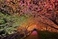 Картинка весна, аллея, ночь, подсветка, парк
