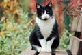 Картинка осень, Кошка, сад, лавочка, черная, белая, сидит