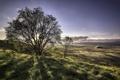 Картинка поле, пейзаж, дерево, утро