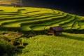 Картинка природа, азия, хижина, плантация