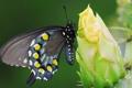 Картинка зеленый фон, цветок, колючки, бабочка, кактус, макро, бутон