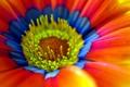 Картинка цветок, обои, лепестки, тычинки