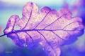 Картинка макро, крупный план, природа, лист, macro