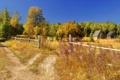 Картинка дорога, лето, забор, дома
