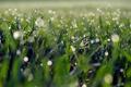 Картинка трава, макро, роса, блики, утро