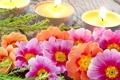 Картинка Цветы, весна, свечи