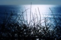 Картинка море, небо, ночь, природа, силуэт, веточки