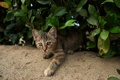 Картинка зелень, кошка, полоски, котенок
