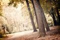 Картинка зелень, лес, листья, свет, деревья, пейзаж, природа