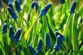 Картинка трава, цветы, весна