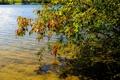 Картинка листья, осень, вода, озеро, дерево