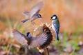 Картинка птицы, крылья, подсолнух, воробей, синица