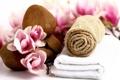 Картинка камни, rose, розовые, spa, лепестки, Tender spirit, petals