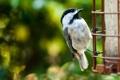 Картинка обои, птичка, клюв, фото, птица, перья, макро