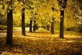 Картинка осень, деревья, листва, аллея, жёлтая, солнечный день, время года