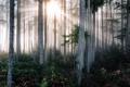 Картинка природа, лес, осень, туман