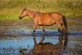 Картинка брызги, профиль, лошадь, вода, конь