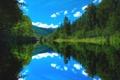 Картинка лес, река, Природа, лето