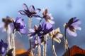 Картинка свет, макро, цветы