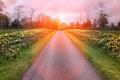 Картинка дорога, пейзаж, цветы