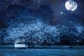 Картинка звезды, деревья, скамейка, ночь, природа, луна, лавочка