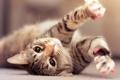 Картинка кот, зарядка, кайф