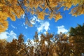 Картинка листья, облака, осень, небо, деревья