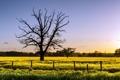 Картинка поле, пейзаж, дерево, забор, рапс