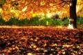 Картинка осень, природа, дерево, листва, клён