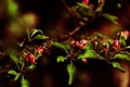 Картинка листья, цветы, ветки, ветви, бутоны, цветение