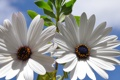 Картинка листья, растение, лепестки, небо, природа