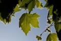Картинка небо, листья, природа