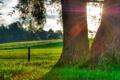Картинка трава, солнце, капли, природа, роса, дерево, утро