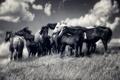 Картинка свобода, природа, кони