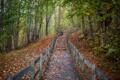 Картинка осень, лес, листья, деревья, парк, путь
