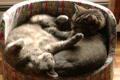 Картинка спят, котенок, кошка