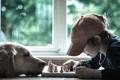 Картинка настроение, собака, шахматы, малчик