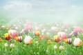 Картинка облака, туман, тюльпаны