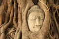 Картинка деревья, голова, джунгли, будда, Ban Wat Tum