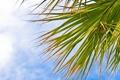 Картинка небо, листья, природа, пальма