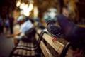 Картинка скамейка, птицы, люди, улица, фокус, размытость, лавочка