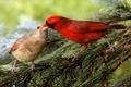Картинка лес, птица, еда, ель, ситуация, ветка