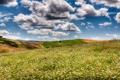 Картинка облака, поле, небо, ромашки, поля